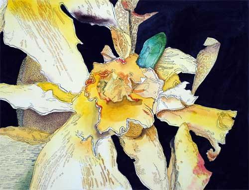 Daffy by Judith Gahn Murphy